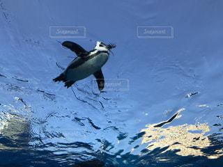 水の中を泳ぐ鳥の写真・画像素材[974632]