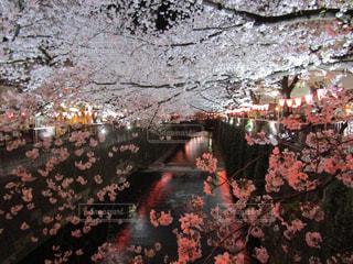 目黒川のほとりの写真・画像素材[826280]