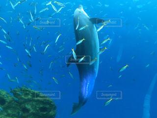 水面下を泳ぐ魚たちの写真・画像素材[826548]