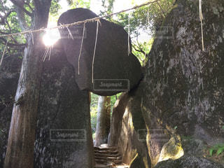 樹木の写真・画像素材[826782]