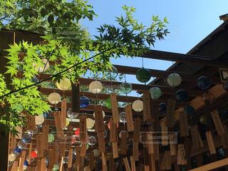氷川神社の写真・画像素材[827546]