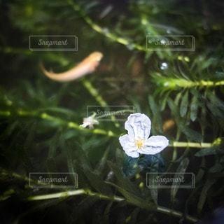 花の写真・画像素材[12058]