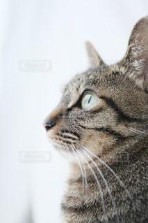 猫 - No.830396