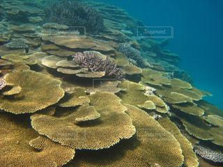 テーブルサンゴの海の写真・画像素材[917306]