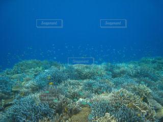 小魚とサンゴの海の写真・画像素材[917313]
