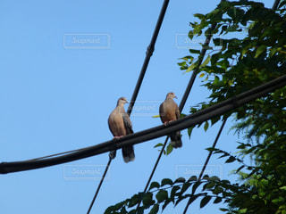 鳩の写真・画像素材[836886]