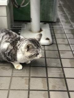 タイル張りの床の上に横たわる猫の写真・画像素材[842896]