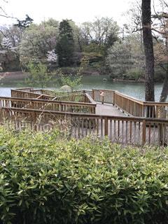 池の桟橋の写真・画像素材[829659]