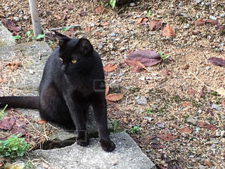 野良猫 - No.830145