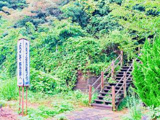近くの緑豊かな緑の森の写真・画像素材[846881]