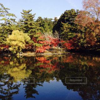 秋の写真・画像素材[831779]