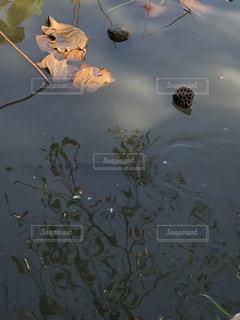 池の水面の写真・画像素材[830792]