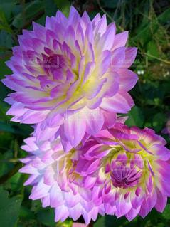 儚い花の写真・画像素材[850838]