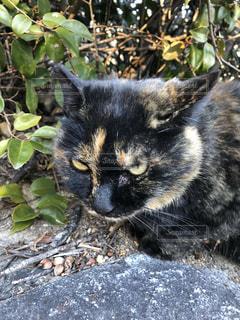 鳴いて呼んでいた猫の写真・画像素材[1015141]
