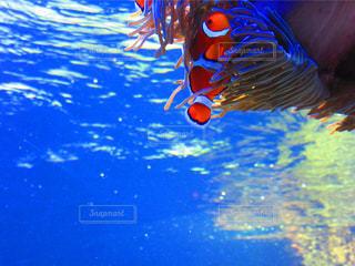魚の写真・画像素材[830462]