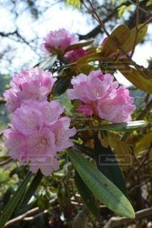 花の写真・画像素材[27725]