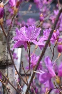 花の写真・画像素材[27736]