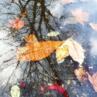 水たまりの落ち葉の写真・画像素材[861418]