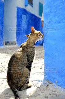 建物の上に座っている猫の写真・画像素材[880832]