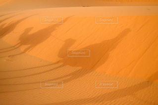 近くにラクダの影の写真・画像素材[880848]