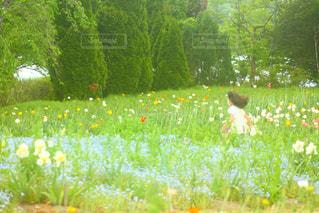お花畑を走る女の子の写真・画像素材[3276296]