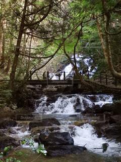 森の中の大きな滝 - No.843803