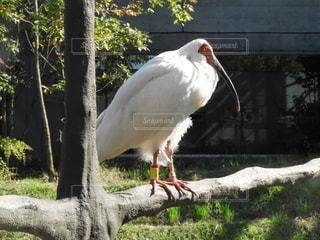 草の中の大きな白い鳥立ち - No.844520