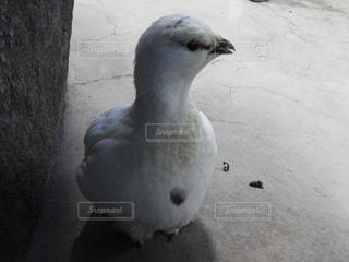 棚の上の鳥立ち - No.844521