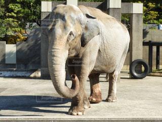 建物の前に立っている大きな象 - No.844523