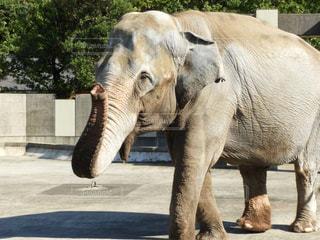 未舗装の道路を歩いて大きな象 - No.844524