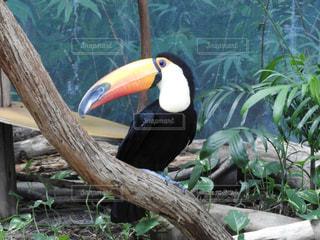 枝の上に座って鳥の写真・画像素材[844542]