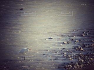 ビーチに立っているカモメの群れ - No.848803