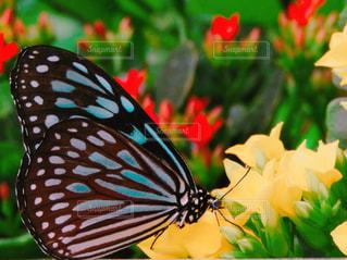 近くの蝶のアップ - No.890901