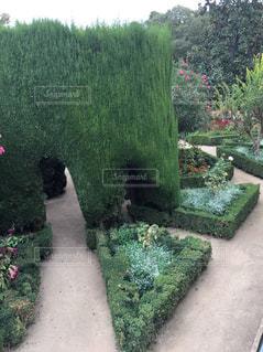 庭園の緑の植物 - No.938171