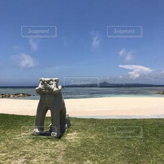沖縄の写真・画像素材[831757]