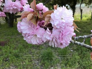 花の写真・画像素材[831889]
