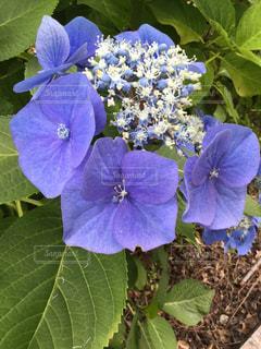 花の写真・画像素材[831960]