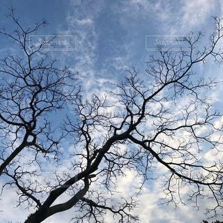 空の写真・画像素材[832445]