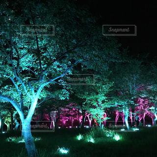 樹木の写真・画像素材[832513]