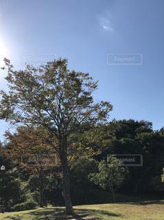 公園の写真・画像素材[840258]
