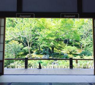 日本庭園を嗜むの写真・画像素材[853388]
