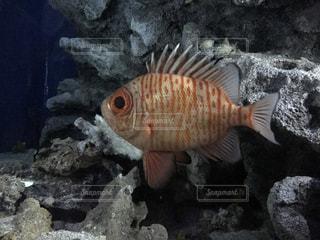 魚の写真・画像素材[833349]