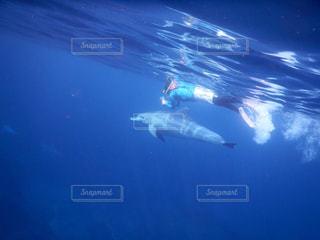 海の写真・画像素材[833651]