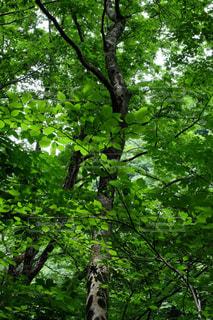 森林浴   新緑  X-T10の写真・画像素材[853230]