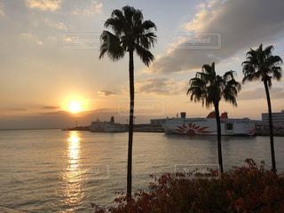 夕陽が映し出す南国の景色の写真・画像素材[856052]