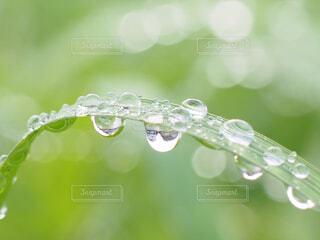 水滴の芸術の写真・画像素材[4612879]