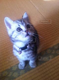 猫の写真・画像素材[833834]