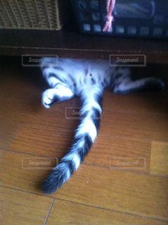 猫の写真・画像素材[833872]