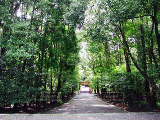 森林の写真・画像素材[834005]