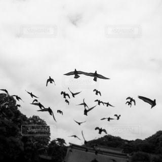 空の写真・画像素材[834006]